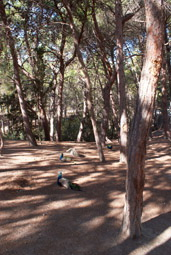 The Plaka forest